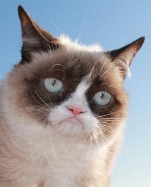 Proud Grumpy Cat - Grumpy Cat Picture
