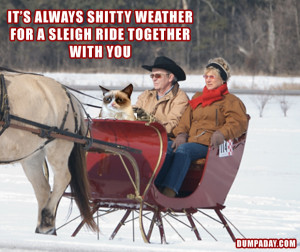 ... weather for a sleigh ride together with you, angry cat, dumpaday