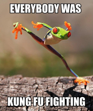 kung fu frog funny kung fu frogs