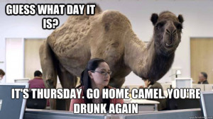 Happy Hump Day Camel gif - PandaWhale