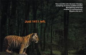 ... .com/_O4RsVH59uMk/TAS3zBa82OI/AAAAAAAABKc/Rbe6_rY8Zt4/tiger-cub.jpg