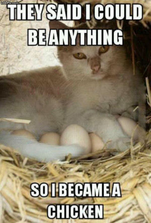 ... Page 16/22 from Funny Pictures 1599 (Chicken Cat) Posted 4/16/2014