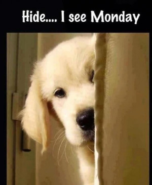 Funny monday quote with cute dog puppy... For more funnies and ...