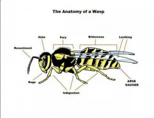Anatomy of a wasp…. lol