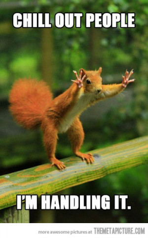 Funny photos funny squirrel hands up