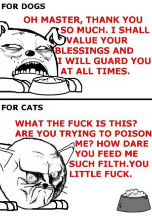 Funny photos funny cat dog food