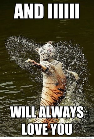 Romantic water tiger – meme