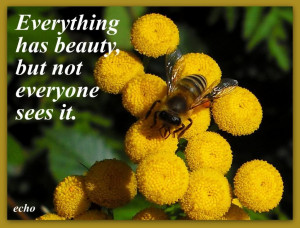 Flowers Quotes Graphics