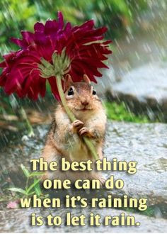 Funny Cat In The Rain Pictures And Quotes