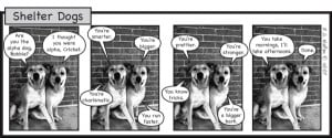Shelter Dogs Cartoon picture
