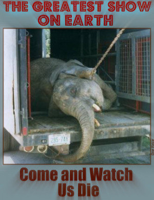 circus Tuesdayclaimed she witnessed vicious acts of animal cruelty ...