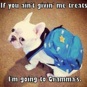 ... quote adorable dog puppy pets meme french bulldog by