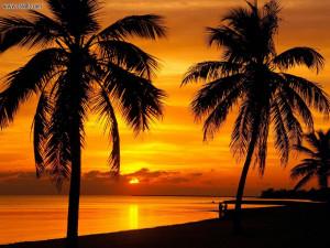 Les palmiers sont là, au rendez-vous, très noirs parce que les ...