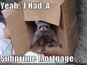 Raccoon Funny Pic