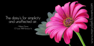 Single pink daisy and Robert Burns daisy quote from Mary Clark Flowers