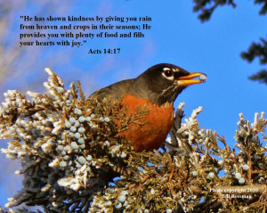 Animals In Heaven Bible Verses Bird photo with bible verse 10