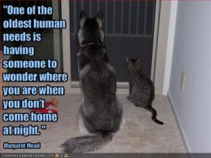 funny cat quotes funny dog