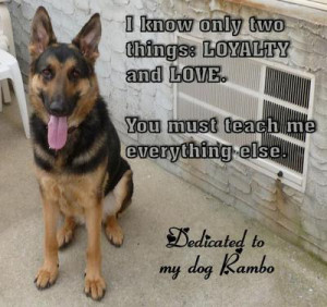 Loyalty and Love: My German Shepherd Dog, Rambo