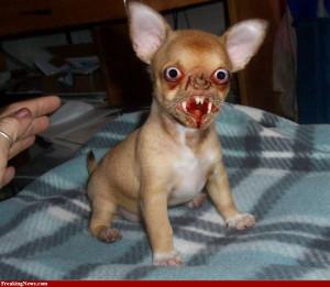 Fotos : perros feos