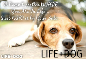 Quotes About Dogs Passing Away Lilly pearl quote