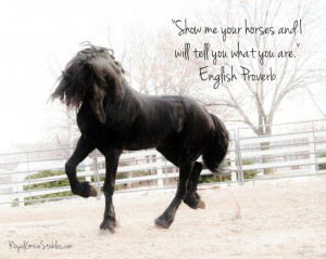 All images are copywrite by Royal Grove Stables. )