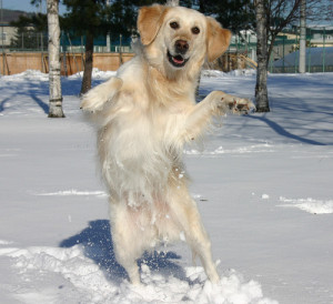 Dog Dance in Pictures-Images