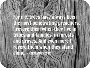 Hermann Hesse quote about trees