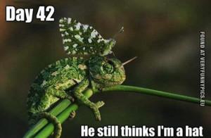 Chameleon Funny Quotes