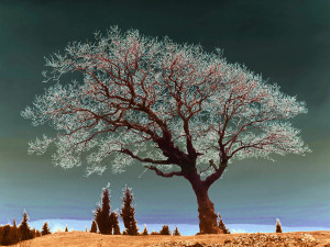 Description Spiritual Tree dsc06786 duo nevit.jpg