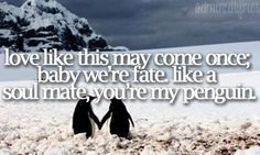 Penguin Love Quotes Poems Penguins love quotes More