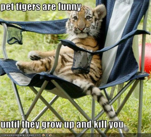 Download Funny Tigers Pictures