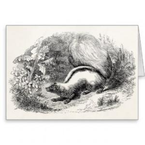 vintage_striped_skunk_1800s_skunks_illustration_card ...