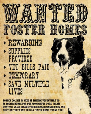 ... Pet Rescue Posters . Pet Rescue Posters . While homeless pets for