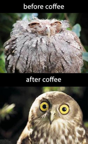 ... quotes, coffee quotes funny, humor owl ...For more funny pics and