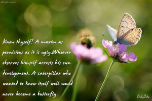butterfly 15 jpg fw alpha q wonderful butterfly quotes dropbox2