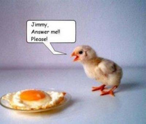 Funny Chicken Pictures (28 Pics of Chicks)