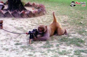 ... desi murga full hd funny birthday quotes gun funny monkey quotes with