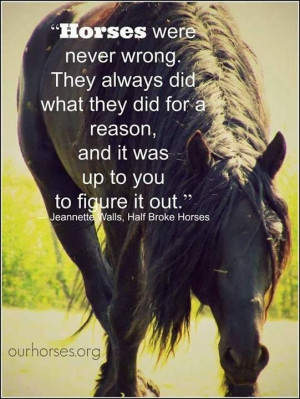 horse quotes equestrian quotes so true hors quotes funny funny