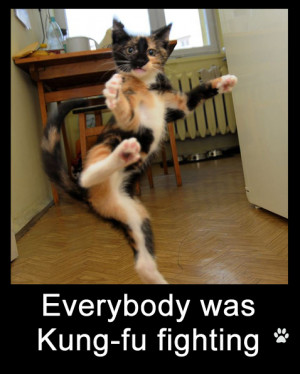 Funny Dog Photos with Captions Everybody was Kung Fu fighting