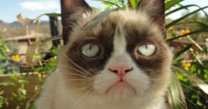 grumpy-cat-quotes-titanic-hd-free-wallpaper-for-android-340x180.jpg