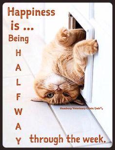 Wednesday Humor   Happy Hump Day   Mid week blues   Animal Humor   Cat ...