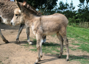 Little Donkey Lynn Greyling