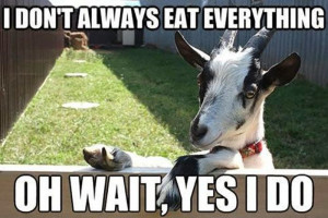 30 Funny animal captions - part 26 (30 pics), funny animal meme, funny ...
