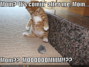 Funny Kitten Pictures With Quotes