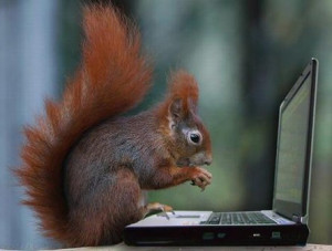 Funny Squirrel Working On Laptop