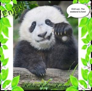 Panda Bear Quotes And Sayings. QuotesGram  Panda Bear Quot...