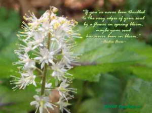 spring quotes spring quote flower quotes spring cleaning quotes spring ...