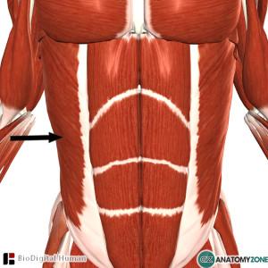 external abdominal oblique muscle pain