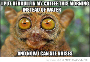 tarsier monkey animal wide eyed coffee redbull see sounds funny pics ...