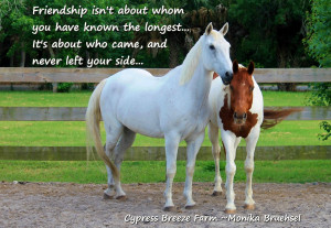 The Beauty of friendship quote- Lessons from the horse